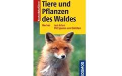Tiere-und-Pflanzen-Wald_Artikelbild