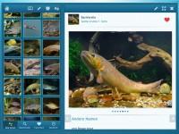 Fische app alphablind2